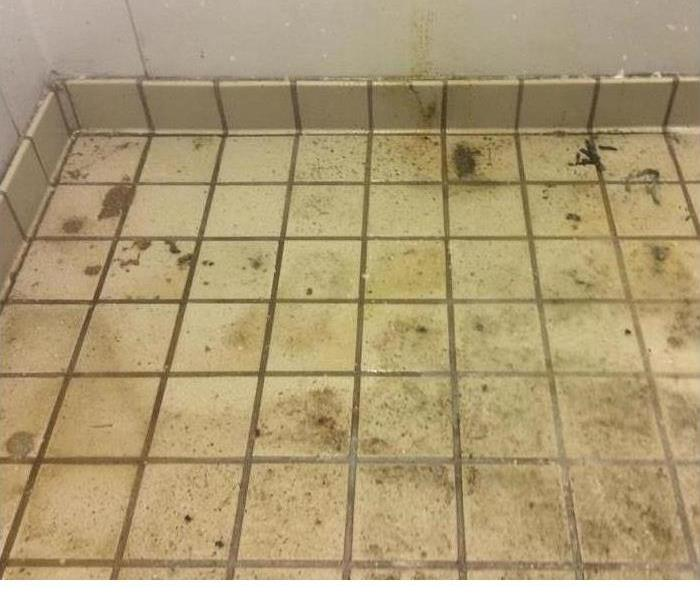 Moisture Problem Leads To Mold