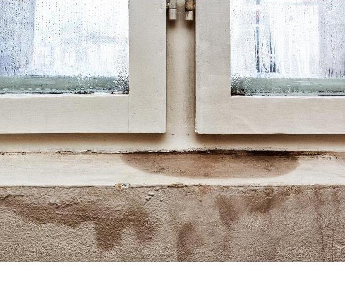 Water Damage Keeping Your Home Mold-Free After a Flood